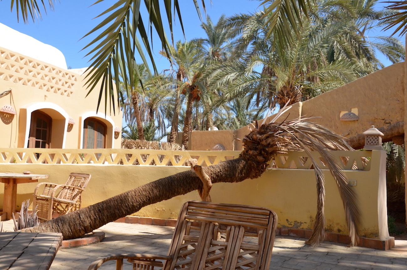 I Siwa bor jeg på det fineste lille oase-logi kaldet Siwa Gardens Hotel. Det er lige stedet hvis man skal skrive, læse og fordybe sig. Så kan man sidde behageligt i haven under dadelpalmerne og bare lade tankerne flyve - det er ren væren. Foto: Anette Lillevang Kristiansen